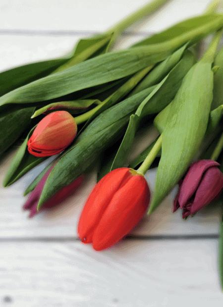 tulipany - eventy i prezenty